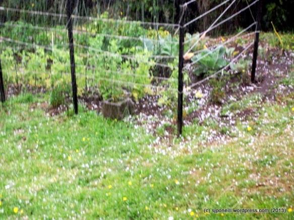 Summer hail 005