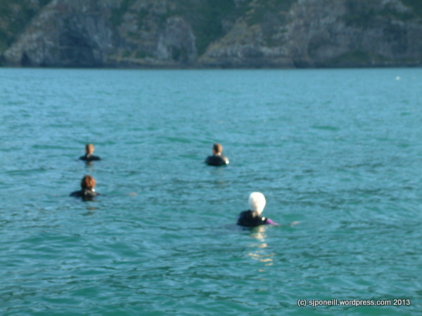 Swimming with Dolphins - Akaroa Harbour 012