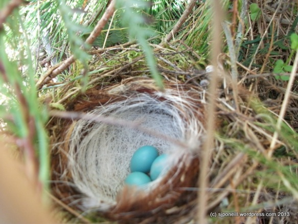 Nesting 002