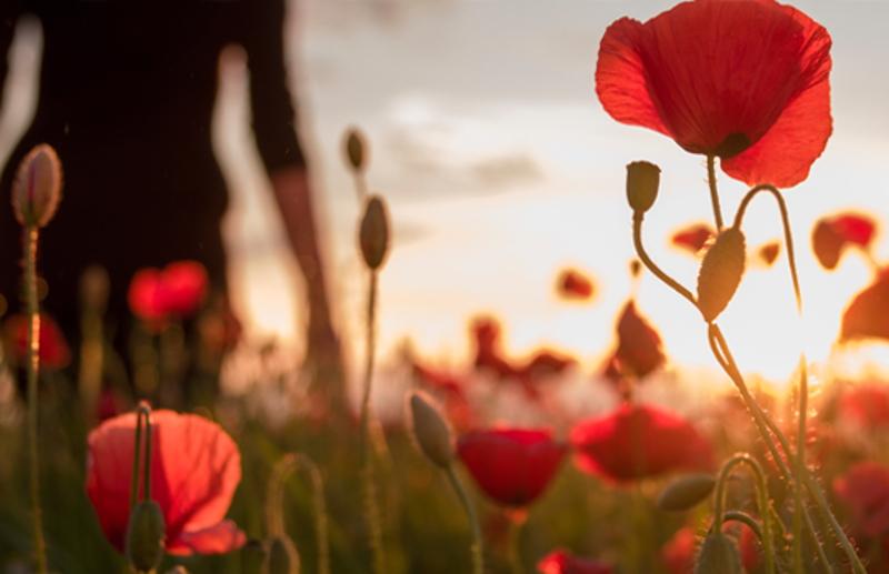 anzac poppy 2016