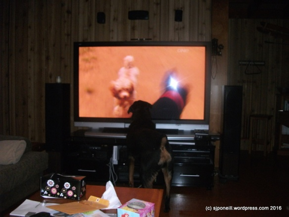 Dogs  27-06-2012 8-31-53 a.m..JPG