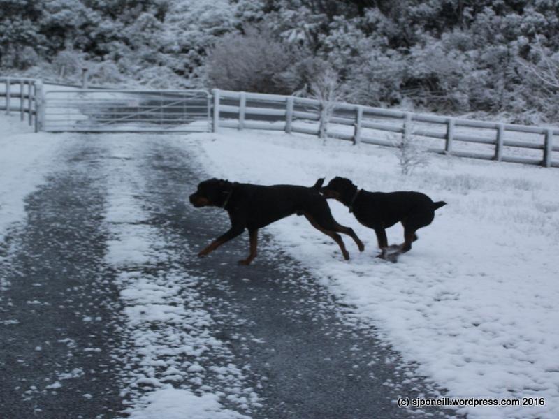 Raurimu snow 055.JPG