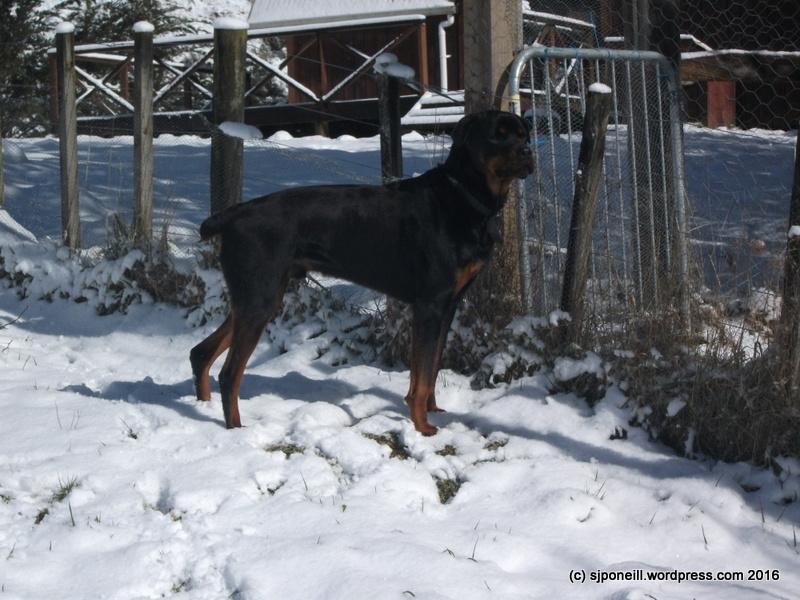 Raurimu snow 083.JPG